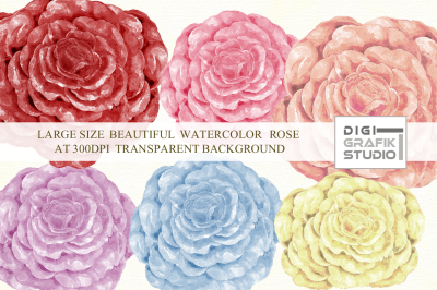 Watercolor Rose , Rose Clipart, Rose Image, Flower
