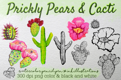 Hand Drawn Clip Art Prickly Pears and Cacti