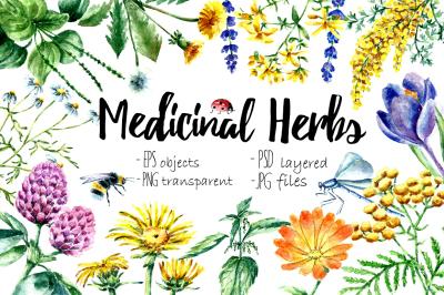 Watercolor Medicinal Herbs