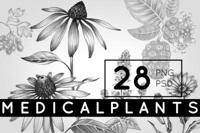 Set of medical plants.