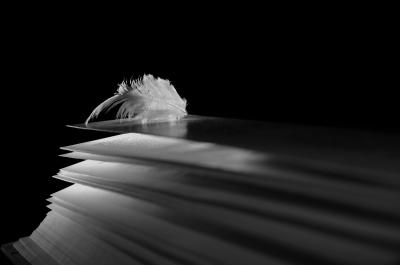 angel feather lying on the pages of an open book