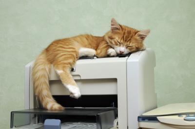 ginger kitten sleeping on the printer