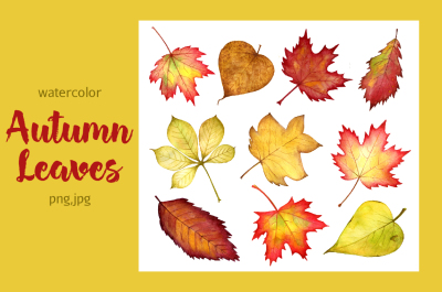 Autumn leaves/Watercolor