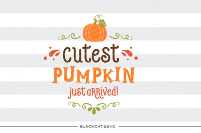 Cutest pumpkin just arrived - SVG file