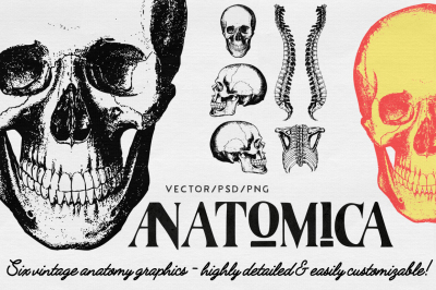 ANATOMICA - vector/psd graphics pack