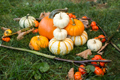 A Lot of different types of pumpkins