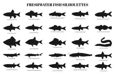 Freshwater fishes silhouettes set