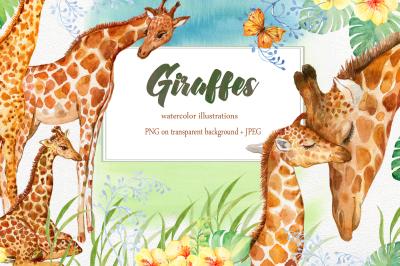Giraffes. watercolor illustrations