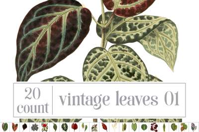 Vintage Leaves Set 01
