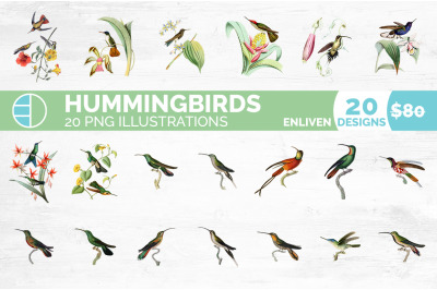 Hummingbird Clipart Bundle