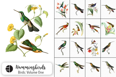 Hummingbirds Watercolor Bird Bundle Volume 01
