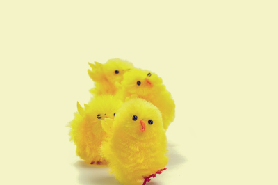 Four easter chicks