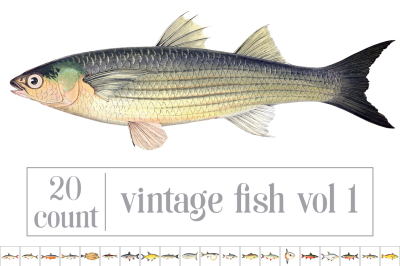 Vintage Fish Bundle: Set 01