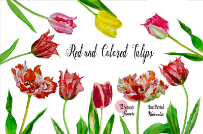 Red and Colored Tulips