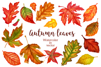 Autumn leaves. Watercolor in vector.