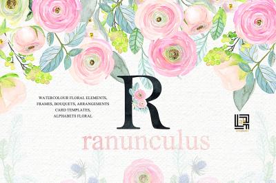 Buttercups. Ranunculus soft pink.Watercolor illustrations