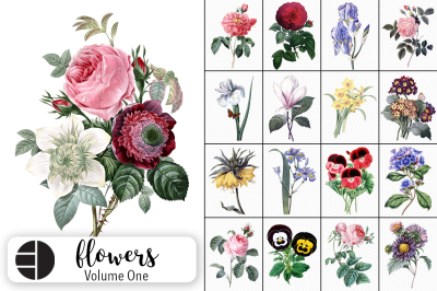 Vintage Watercolor Flowers Volume One (20 Count)