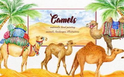 Camels. watercolor illustrations