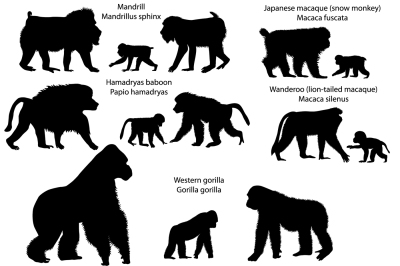 Silhouettes of monkeys