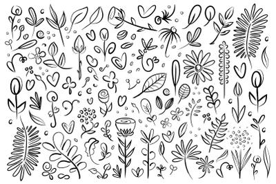 Plant & Flower Specimen Doodles