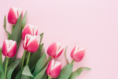 Bouquet of pink tulips.