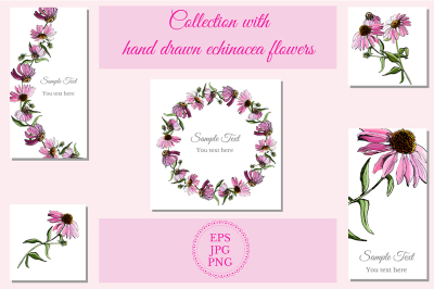 Set with sketches of echinacea flowers.