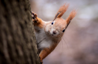 Smiling squirrel on the tree
