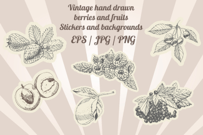 Bundle with sketches of vintage berries and fruits . Background and st