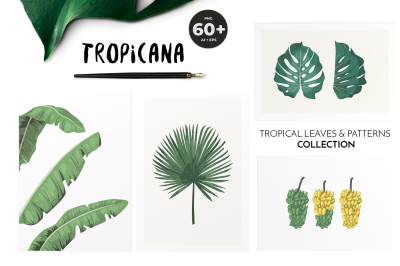 TROPICANA: tropical leaves & patterns collection