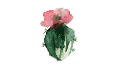 cactus-watercolor