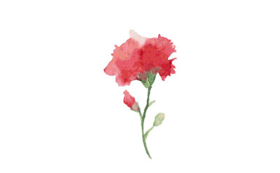 carnation-watercolor