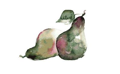 Pears-watercolor