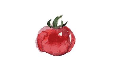 Tomato-watercolor