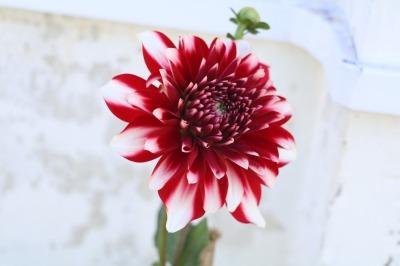 56 Pretty Flower bundle Set 2