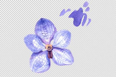 Vanda blue magic PNG watercolor flower set