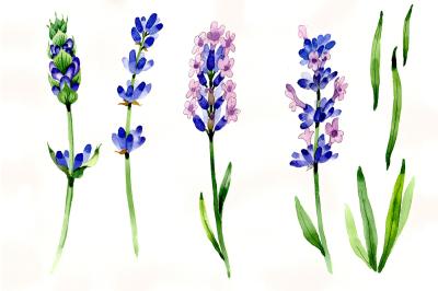 Nice flower purple lavender PNG watercolor set