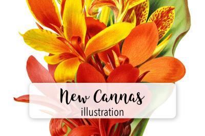 Flowers: Vintage New Cannas