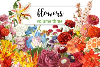 Flowers: Volume Three (20 Count)