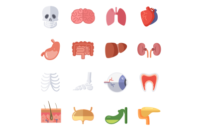 Male and female anatomy. Vector illustration set of human organ