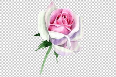 Pink rose watercolor flower PNG