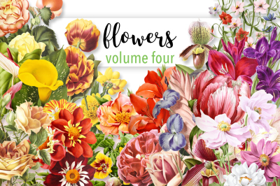 Flowers: Volume Four (20 Count)