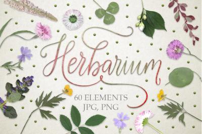 Herbarium. 60 real herbarium elements.