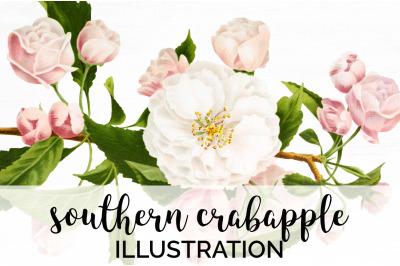 Crabapple Blossom Clipart