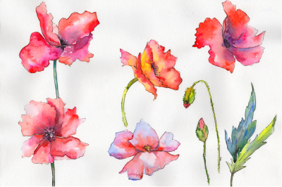 Light red poppy PNG watercolor flower set