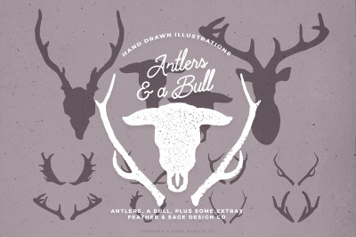 Antlers & a Bull Illustrations