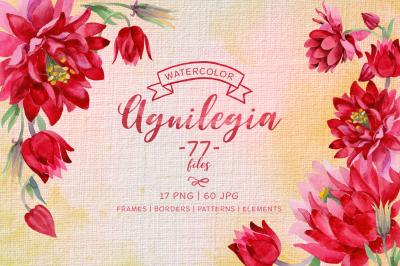 Aquilegia cool flower PNG watercolor set