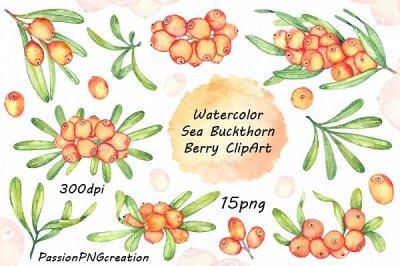 Watercolor Sea Buckthorn Clipart