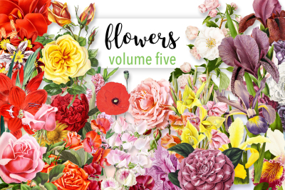 Flowers: Volume Five (20 Count)