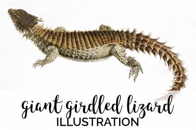 Lizard Clipart Girdled