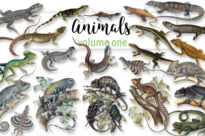Animals: Volume One